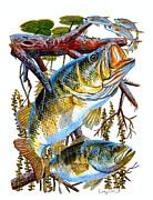Lurking Bass Print by Carey Chen