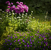 Garden Flowers Photos - Lush blooming garden  by Elena Elisseeva