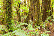 Forestation Framed Prints - Lush ferns in sub-tropical NZ Kahikatea rainforest Framed Print by Stephan Pietzko