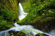 Lush Foliage Framed Prints - Lush Gorge Falls Framed Print by Darren  White
