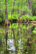 Cypress Swamps Framed Prints - Lush Framed Print by JC Findley