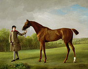 Thoroughbred Paintings - Lustre held by a Groom by George Stubbs