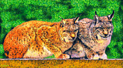 Landscape Drawings Drawings Acrylic Prints - Lynx Acrylic Print by George Rossidis