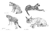 Cheetah Pastels Framed Prints - Lynx - ocelot - cheetah studies Framed Print by Kurt Tessmann