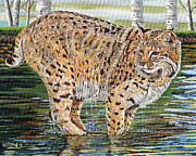 Lynx Painting Posters - Lynx on the Rocks Poster by Sandra Wilson