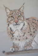 Big Cat Pastels Posters - Lynx Poster by Sue Arber