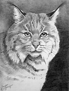 Bobcat Drawing Drawings Posters - Lynx Poster by Suzanne Schaefer