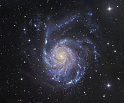 Ursa Major Posters - M101, The Pinwheel Galaxy In Ursa Major Poster by Robert Gendler
