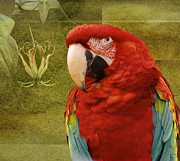 North Vancouver Digital Art Posters - MaCaw and flowers Poster by Gene Tewksbury