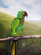 Yellow Beak Paintings - macaw II by Kenneth Harris