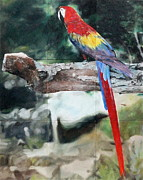Macaw Pastels - Macaw In Captivity by Miguel Lopez