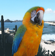 Victoria Harrington - Macaw in Window
