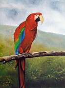 Yellow Beak Paintings - Macaw by Kenneth Harris