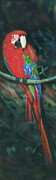 Macaw Painting Framed Prints - Macaw Framed Print by Luis  Navarro