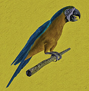 Macaw Mixed Media - Macaw on a Perch by Fotios Pavlopoulos