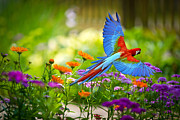 Raspberry Photo Originals - Macaw Parrot by Jakkapan Chalermphong