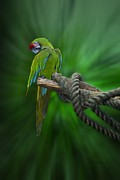 Also Digital Art - Macaw Parrot Preening by Thomas Woolworth