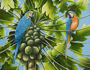 Blue And Gold Paintings - Macaw Parrots in Papaya Tree by Mary Ann King