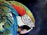 Macaw Drawings - Macaw by Rena Chereti