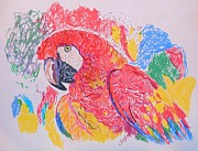 Macaw Drawings - Macaw by Stacey Pollio