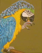 Sacred Pastels Originals - Macaw by Tonya Butcher