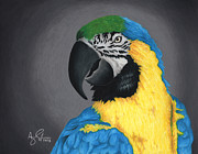 Macaw Drawings - Macaw by Troy Argenbright