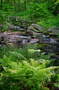 Connecticut Scenery Photos - Macedonia Brook by Bill  Wakeley