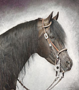Horse Drawing Prints - Maclintock V Print by Helen Bailey