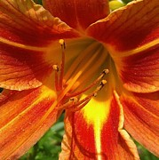 Courtnee Epps - Macro Lily