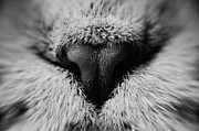 Hair Photos - Macro Noses by Yevgeni Kacnelson