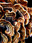 Fungus Prints - Macro Saprophyte Print by ABeautifulSky  Photography