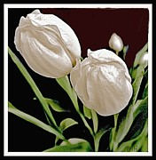 Brown And Green Posters - Macro Tulips Poster by Marsha Heiken
