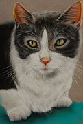 Gray Pastels - Macy Gray Cat by Jean Cormier