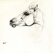 Wild Horses Drawings Metal Prints - Mad Andalusian Horse Drawing 05 11 2013 Metal Print by Angel  Tarantella