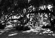 Spanish Moss Prints - Made In The Shade Print by Mel Steinhauer