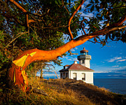 North America Art - Madrone and Lighthouse by Inge Johnsson