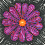 Daisies Drawings Prints - Magenta and Purple Flower Print by Nina Kuriloff