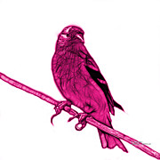 Goldfinch Digital Art Prints - Magenta Lesser Goldfinch - 2235 F S M Print by James Ahn