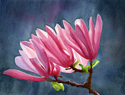 Sharon Freeman Art - Magenta Magnolias with Dark Background by Sharon Freeman