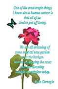 Ion vincent DAnu - Magenta Red Rose with Butterfly and Quote