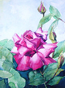 Floral Paintings - Magenta rose on white center by Greta Corens