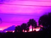 Debb Starr - Magenta Sky with Palms