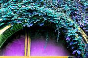 Ginny Gaura - Magenta Window