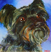 Schnauzer Framed Prints - Maggie Framed Print by Sue  Darius