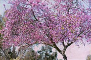 Cherry Blossoms Photos - Magic In The Air by Fraida Gutovich