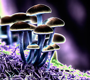 Fungi Metal Prints - Magic Mushrooms Metal Print by Melody and Michael Watson