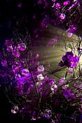 Magic Rays Print by Nadya Ost