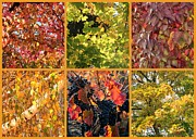Grape Leaves Photo Posters - Magical Autumn Colors Collage Poster by Carol Groenen
