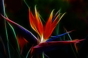 Fractal Art Photo Acrylic Prints - Magical Bird of Paradise Acrylic Print by Sandra Bronstein