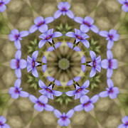 Houstonia Pusilla Framed Prints - Magical Bluet Wildflower Kaleidoscope Framed Print by Kathy Clark